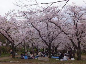 大阪城公園でお花見