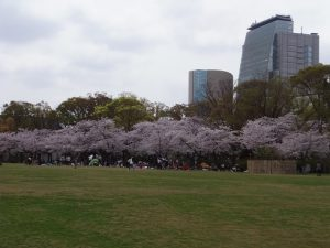 大阪城西の丸庭園の桜