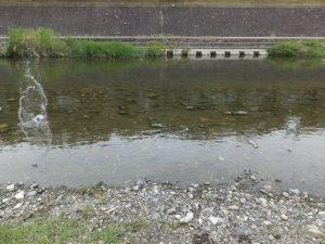 高槻芥川で川遊び