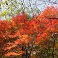 武田尾 廃線敷ハイキングコース紅葉狩り・散策 最新情報