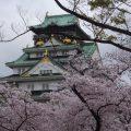 【桜開花状況】大阪城公園西の丸庭園と毛馬桜ノ宮公園は満開 4月9日