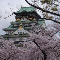 大阪城公園と毛馬桜ノ宮公園の桜