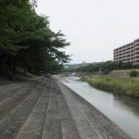 川遊びができる高槻芥川桜堤公園
